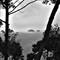 samui-island-view-through-trees-black-and-white[1]