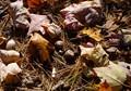 acornsm