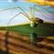 2012 11 24 12-02-35 - IMGP9912b4_resize