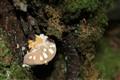 The Fungus Among Us