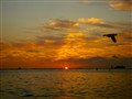 Orange Glow Over Honolulu, HI  From A Bird's Perspective