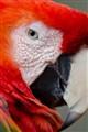 Parrots Portrait