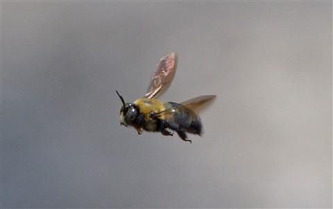 Mailbox Bee IMG_3217