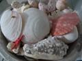 P1190814.jpg bowl of shells