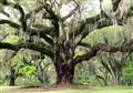 Plantation Trees