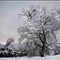 Snow Oak 0288 BnW 1280w