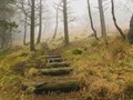 Wooden steps_into the Mist