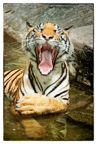 Yawnnn!
