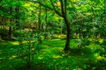 A green park