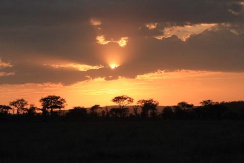 Sole Tanzania