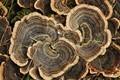 Patterned fungi
