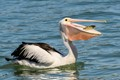 Pelican Breakfast