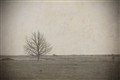 2011-08-06_Lonely_dry_tree