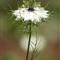 whitepurpleflower2