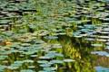Lake full of aquatic plants