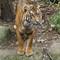 Zoo29514 (3)