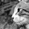catwp