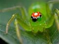 A Spider Wink!