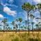 Florida-Field