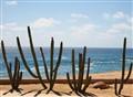 Cabo Desert