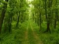 the unending path