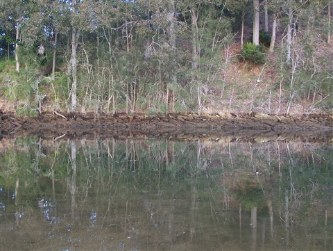 Moruya River Bank