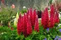 Rock Garden ~ Lyme Regis