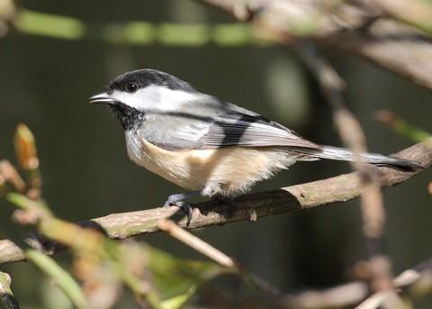 1-Teaneck Birds 4