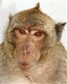Monkey mugshot