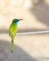 bird at Masada