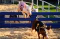 Fresno (CA) Fair Pigs