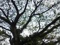 Tree-How Big I'm!