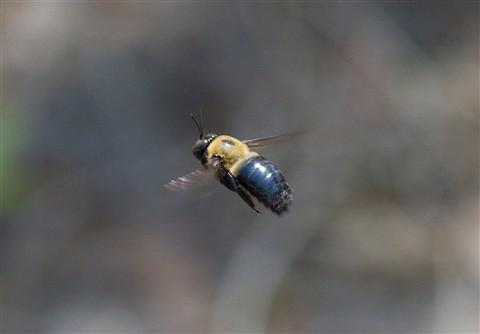 Mailbox Bee IMG_3182