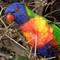 Bird 5 PV