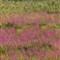 HeronandWildflowers_edited3