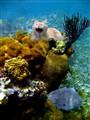 Rare Saltwater Catfish