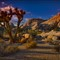 Joshua Tree HDR 13