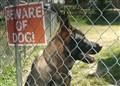 Guard Dog-7307863