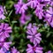 2014_May__30_190337_edited