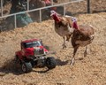 Turkey Races