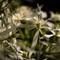 Wild Flowers-3