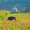 2010 10 07 09-13-55 - IMGP6757b_resize