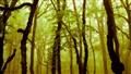 Golestan Forest