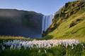 Icelandic Serenity