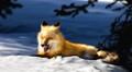 A Happy Fox