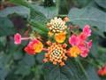 micro bouquet