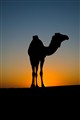 A friend in dune