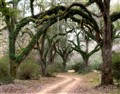 Louisiana Plantation Road