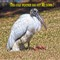 Stork 3-26-13