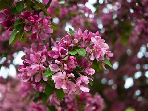 Flowers (3 of 4)
